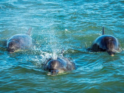 Community support key for dolphin watching facility to open in 2020
